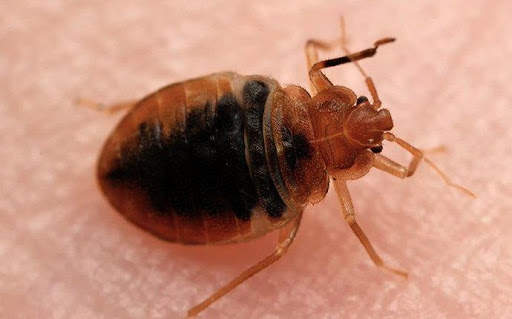 bed bug pest control okc