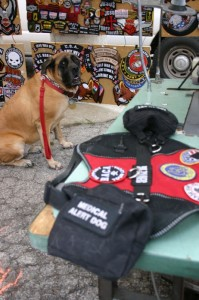 Service dog Roxy makes sure the patch job gets done properly