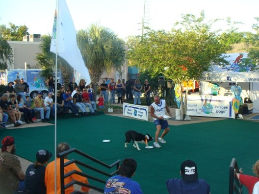 Harley and the rest of the Disc-Connected K9's perform their signature tricks for the crowd