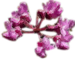redbud blooms rendered with painting effect