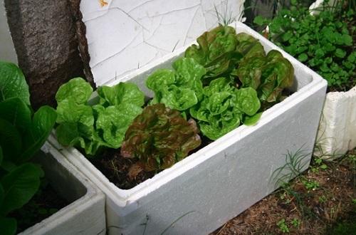 Bán thùng xốp trồng rau tphcm ở đâu ?