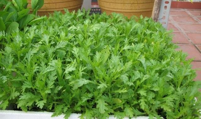 Các loại rau trồng được trong thùng xốp