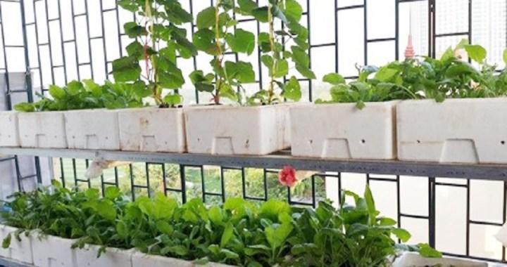 Bán thùng xốp trồng rau tphcm ở đâu bền chắc nhất?