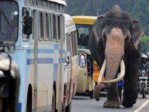 HEAVY TRAFFIC IN LANKA