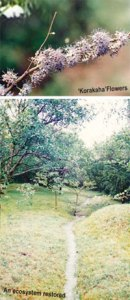 KORAKAHA FLOWERS