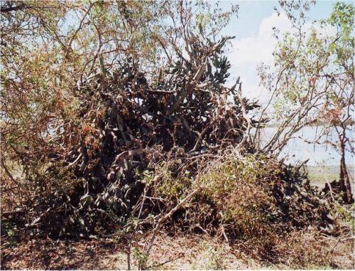 02- bunker