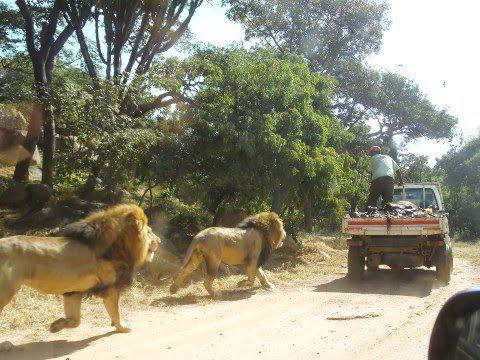 AFRICA 77