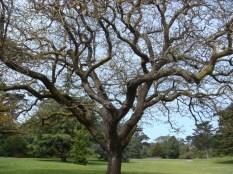 Medusa Tree - m