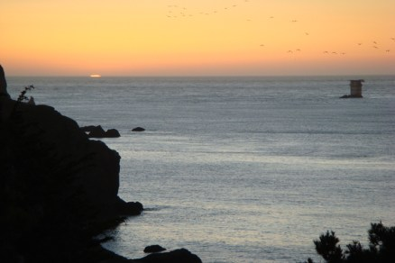 Pelicans Chase The Sunset at China Beach in SF - m