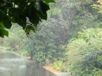 Rain - pseudo - m