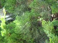 Web - m
