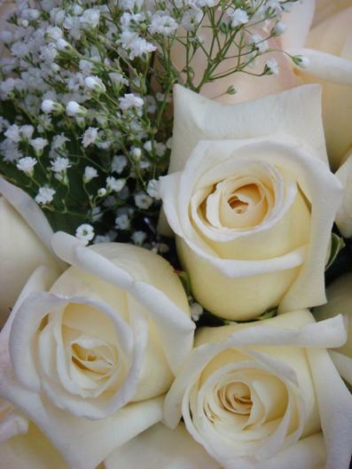 White Roses - m