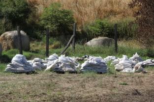 Übrig gebliebene Sandsäcke auf der Schweinemastanlage
