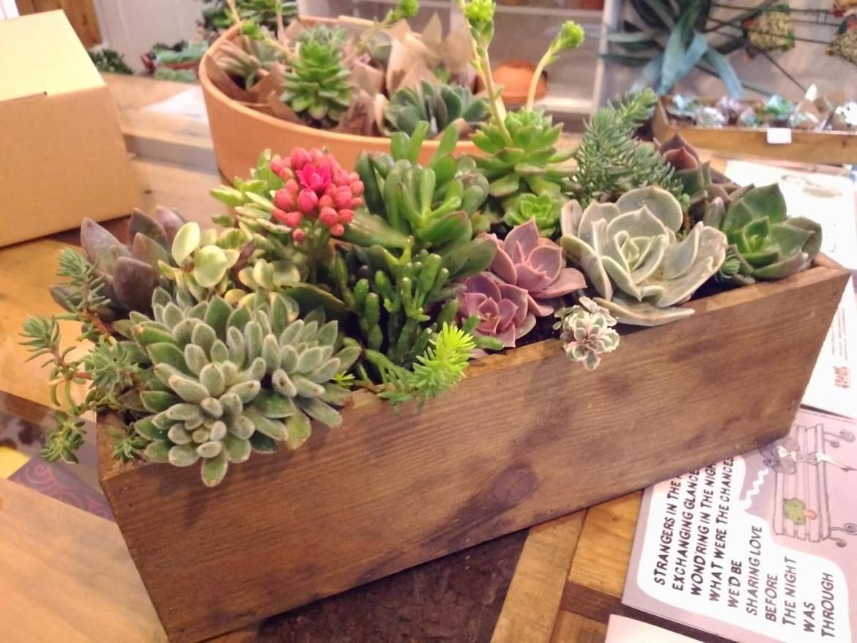 arranjo suculenta caixote de madeira