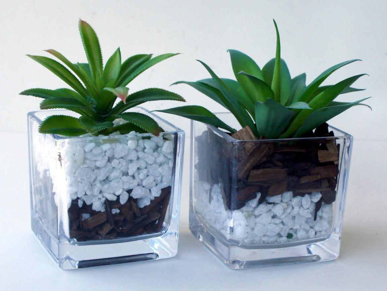 vasos vidro com suculentas