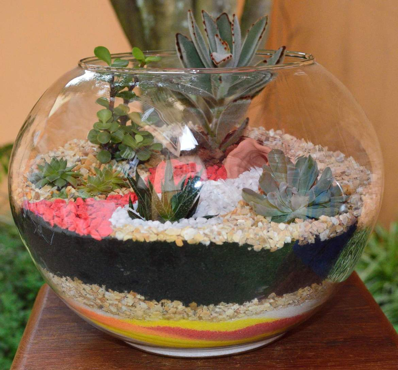 vasos de plantas suculentas lembranças