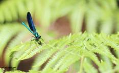 dragonfly_1