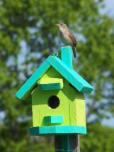 Birdhouse1szd