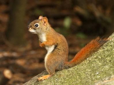 07-squirrel_waiting