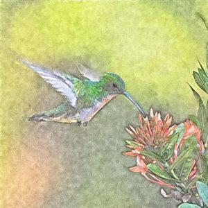 vliegende vreugde