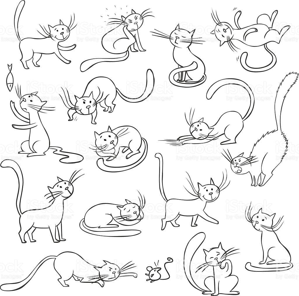 Immagini Di Gatti Per Disegnare E Copiare Piu Di 100