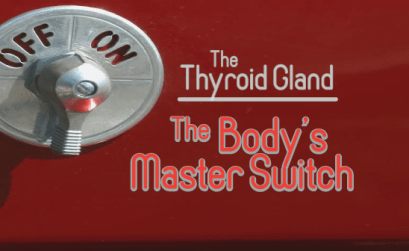 The-Thyroid-Gland-Is-The-Body's-Master-Switch