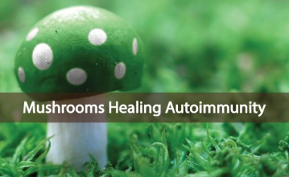 Can-Certain-Mushrooms-Help-Heal-Your-Immune-System
