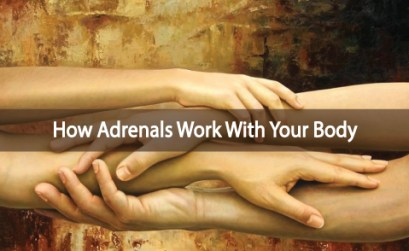How-The-Adrenals-Interact-Within-Your-Body