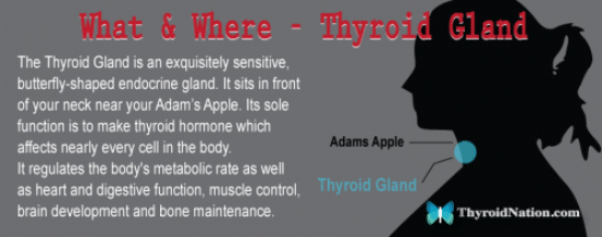 What-Is-Thyroid-Gland