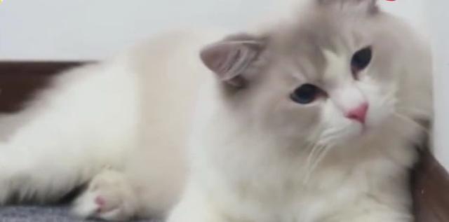 為什麼每到晚上家裡的貓咪總會盯著某處一直盯著不放? - 每日頭條