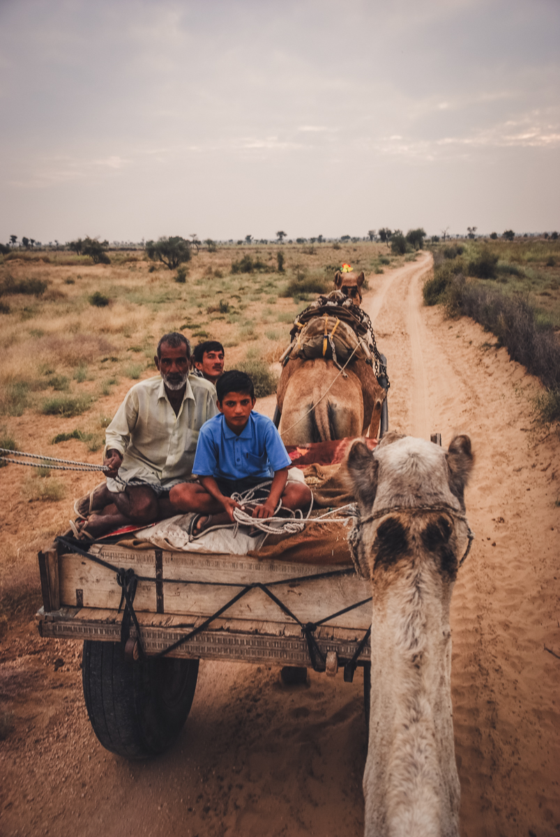 night out in the thar desert on camels