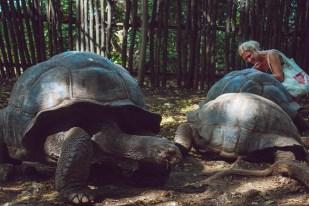 giant turtles stone town