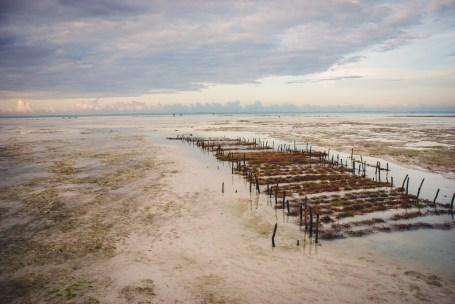 coltivazioni di alghe a jambiani