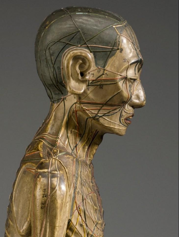 Modèle d'acupuncture en bois, Asie, années 1600, vue latérale du profil du haut du torse et de la tête