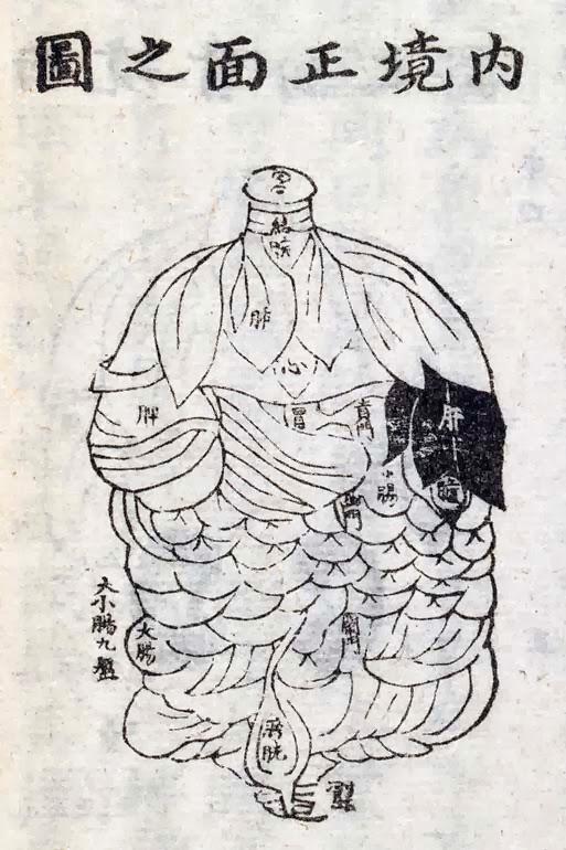 Représentation de l'aspect de l'intérieur du corps vu de face selon Yanluozi