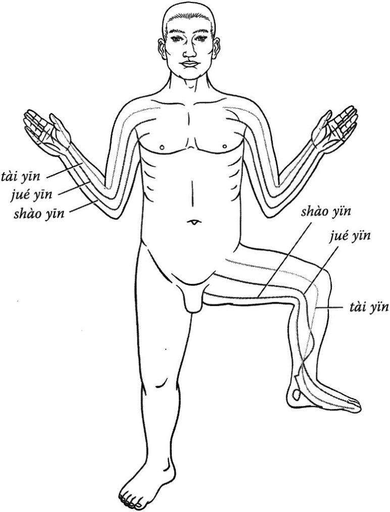 Schémas des méridiens yin