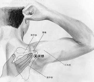 Articulation de l'épaule, 肩髃 jiānyú, est le quinzième point du méridien du gros intestin