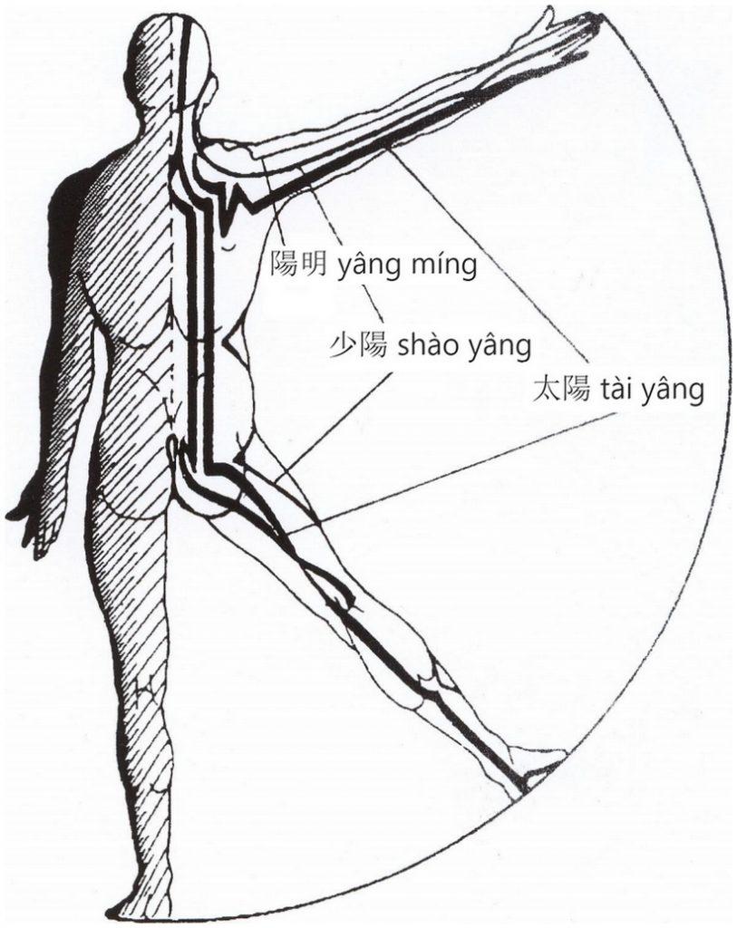 Illustration des trois grands méridiens yang