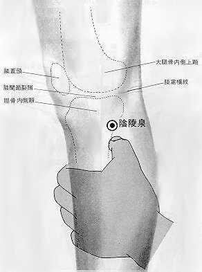 Source de la colline yin, 阴陵泉 yīn líng quán, est le neuvième point duméridien de la rate.