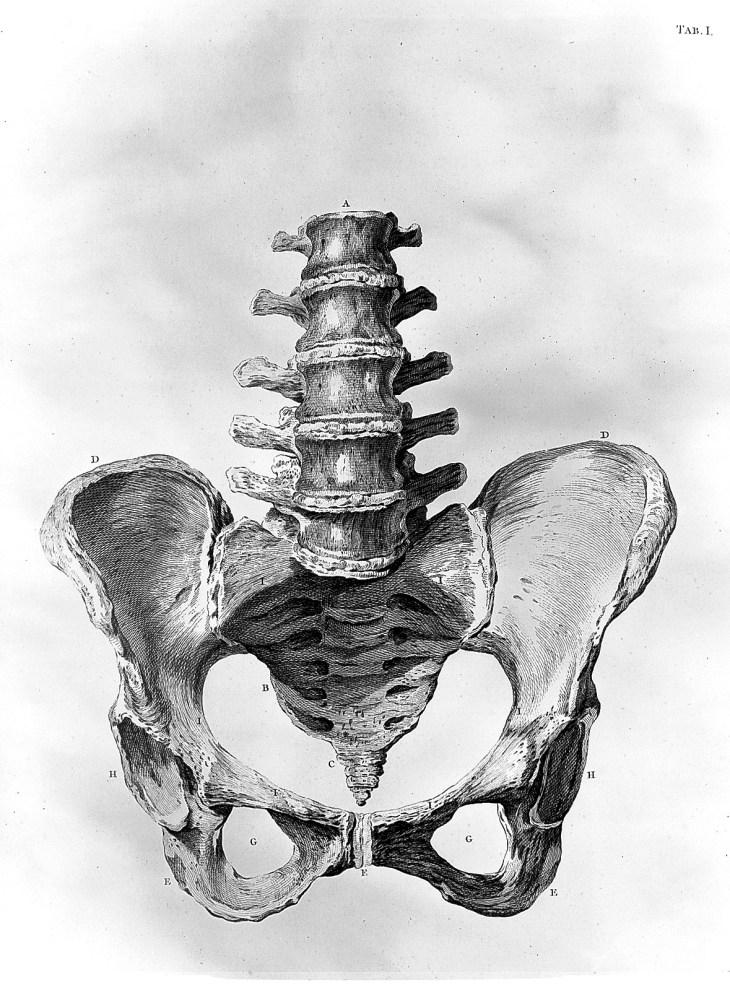 Bassin et base de la colonne vertébrale, planche anatomique extraite du Traité sur la théorie et la pratique de la profession de sage-femme de William Smellie (1697-1763)