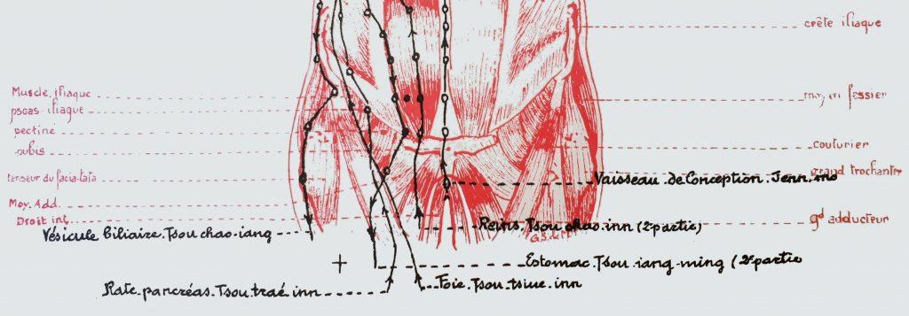Face antérieure du tronc, détail illustration de l'atlas d'acuponcture chinoise de Georges Soulié de Morant