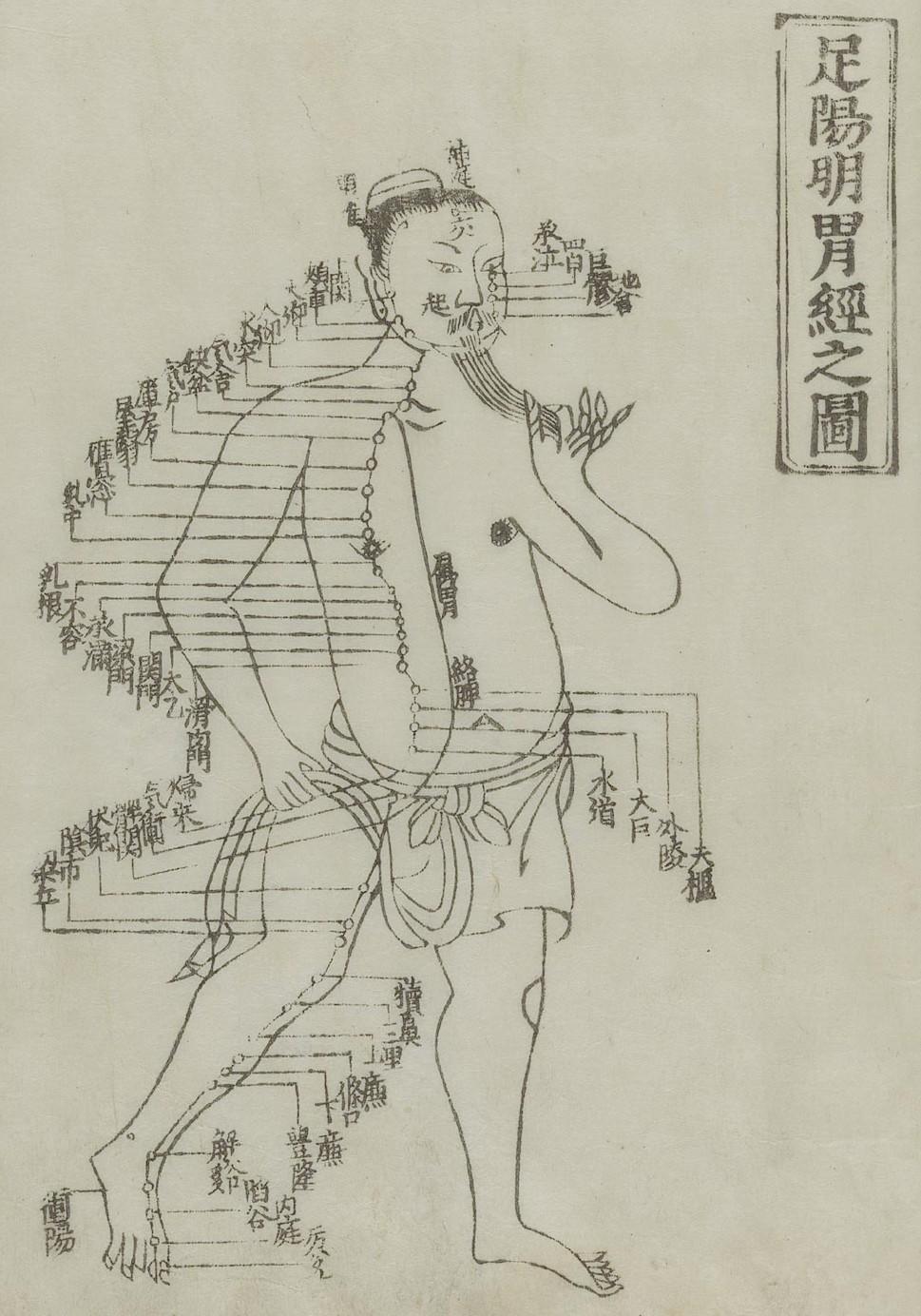 Gravure sur bois montrant le méridien de l'estomac d'un homme debout, de face, portant un pagne avec le méridien dessiné sur la poitrine et la jambe avec des caractères chinois donnant les noms des points, de Jushikei hakki de Hua Shou, 1716