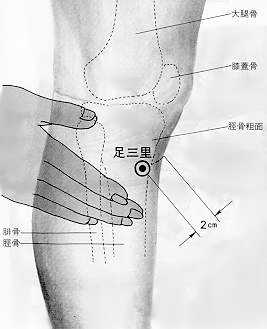 Trois distances, trois internes, 足三里, zú sān lǐ, est le trente sixième point du méridien de l'estomac.