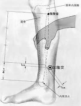 Croisement des trois yin, 三陰交 sānyīnjiāo, est le sixième point du méridien de la rate.