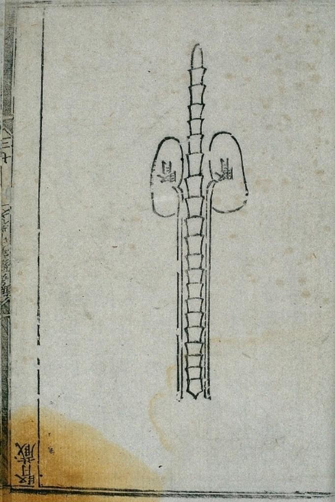 腎臟 shèn zàng, gravure sur bois illustrant une édition de 1537.