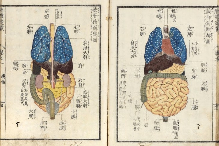 Explication de l'anatomie humaine, les organes, Kaitai hatsumo