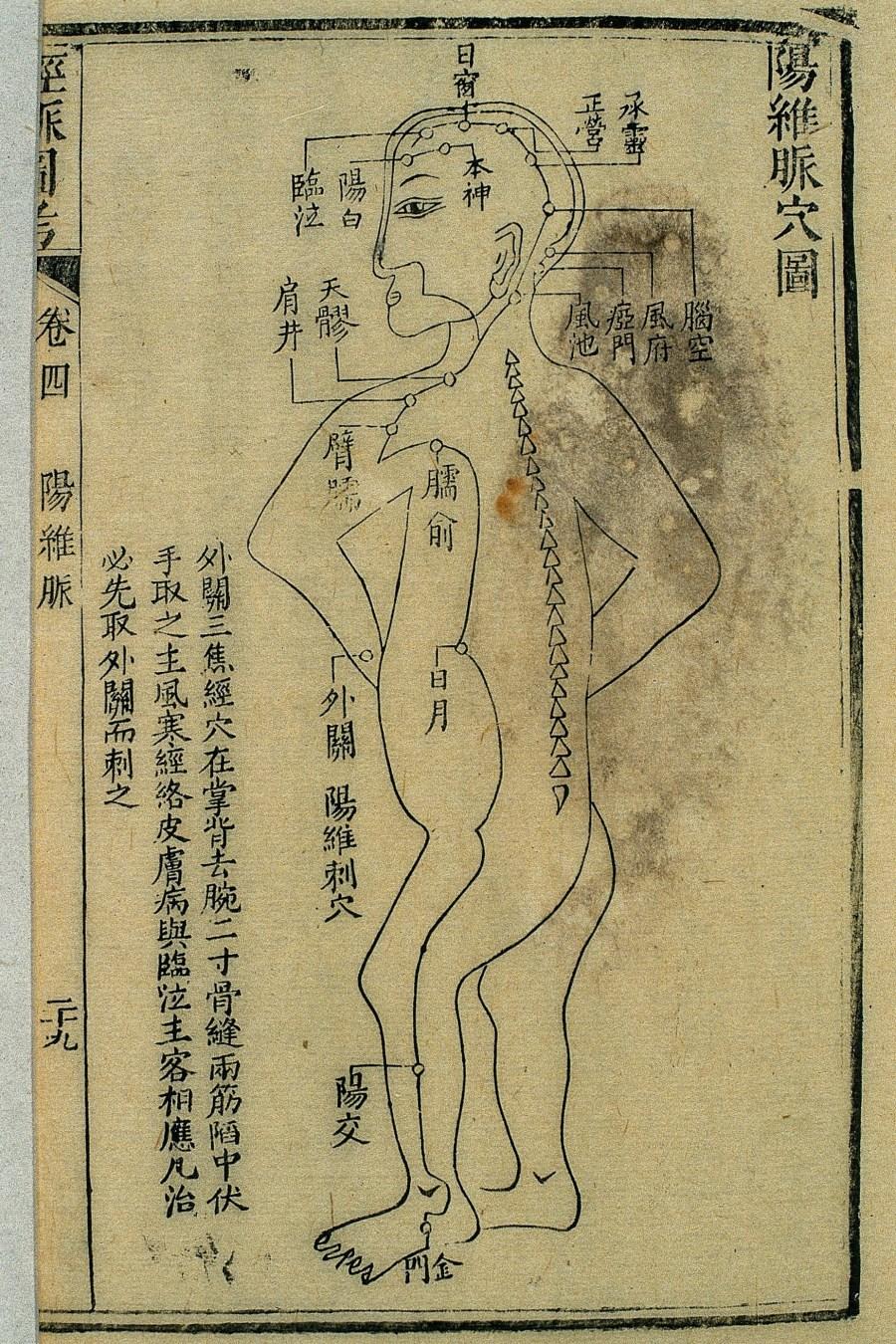 Gravure sur bois, illustrant le trajet du 陽維脈 yáng wéi mài, tirée de l'étude illustrée des canaux (經脈圖考 jīng mài tú kǎo), publiée en 1878