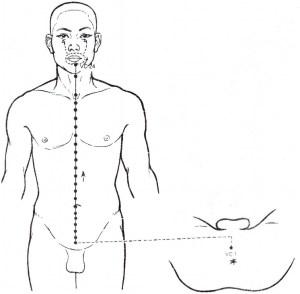 Illustration du 任脈 rèn mài