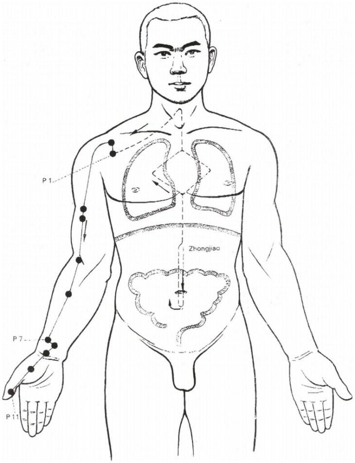 Illustration du méridien du poumon