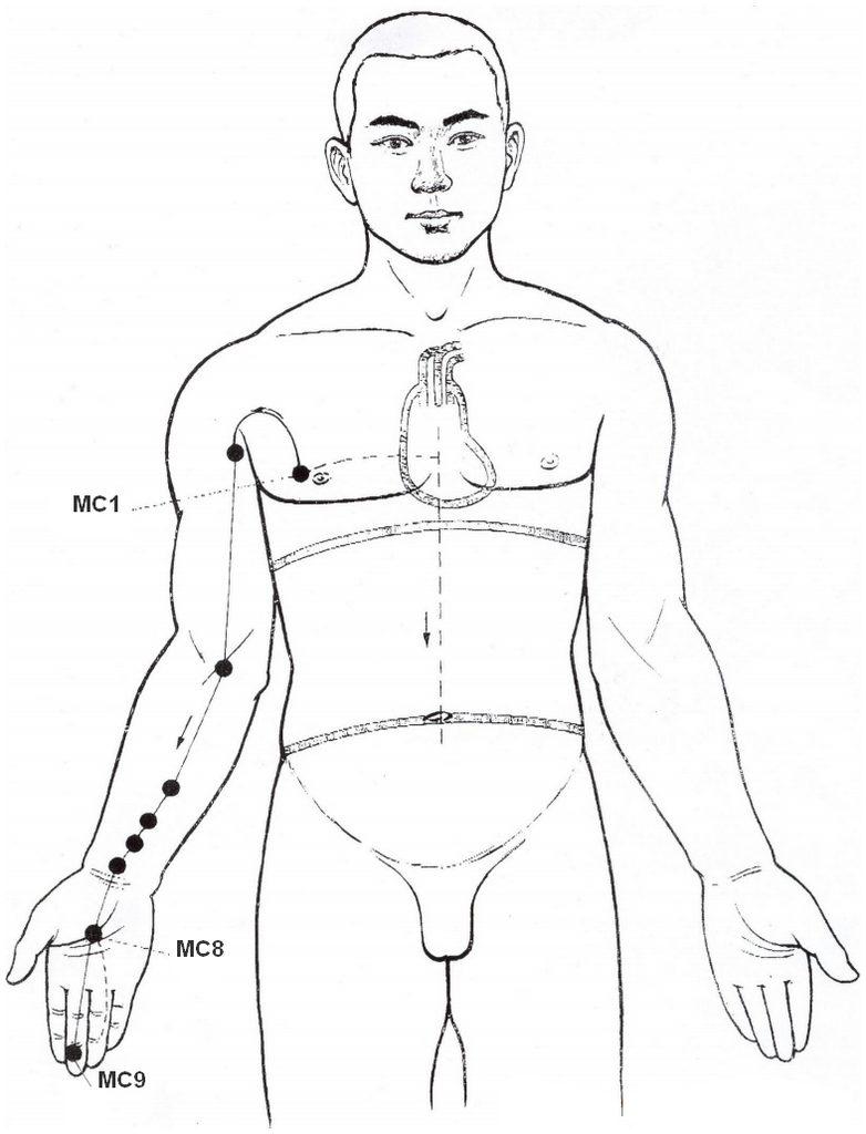 Illustration du méridien maître du cœur